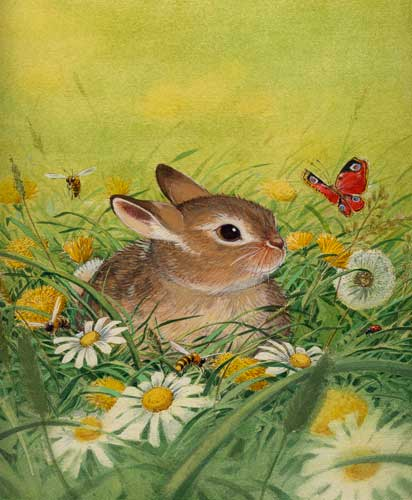 illustration, Hase, Schmetterling,Kinderbuchillustration