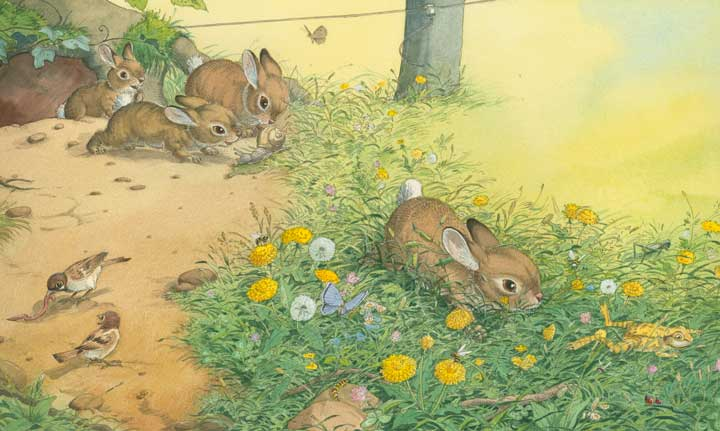Illustration Hase,Kaninchen,Kinderbuchillustration